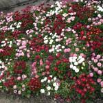 Salzburg Flowers - 9flats.com