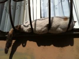 Ever-present cats